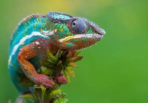 25-Most-Beautiful-Animals-Photography-StumbleUpon-2